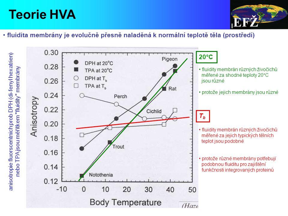 EFŽ Teorie HVA. fluidita membrány je evolučně přesně naladěná k normální teplotě těla (prostředí) 20°C.