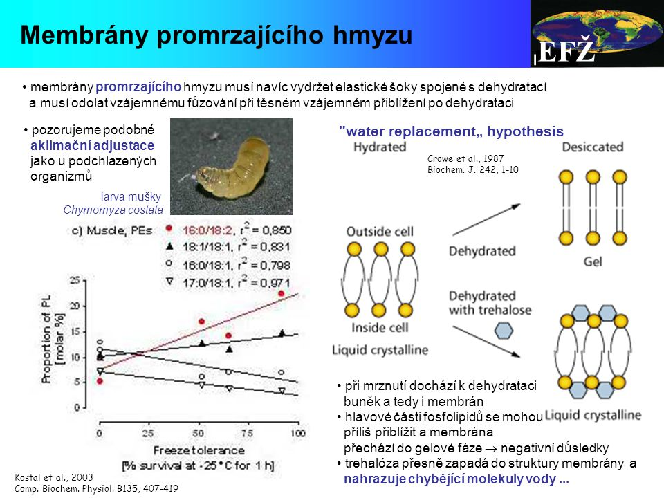 """EFŽ Membrány promrzajícího hmyzu water replacement"""" hypothesis"""