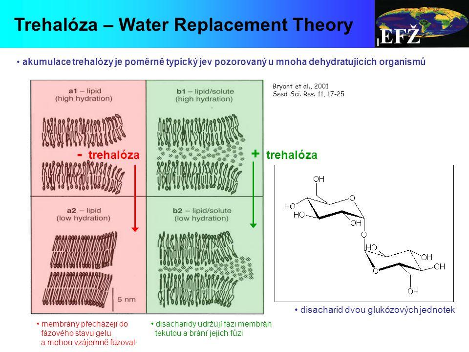 EFŽ Trehalóza – Water Replacement Theory - trehalóza + trehalóza