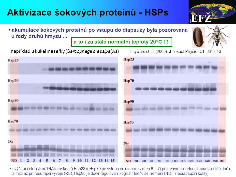 EFŽ Aktivizace šokových proteinů - HSPs diapauses at pupal stage