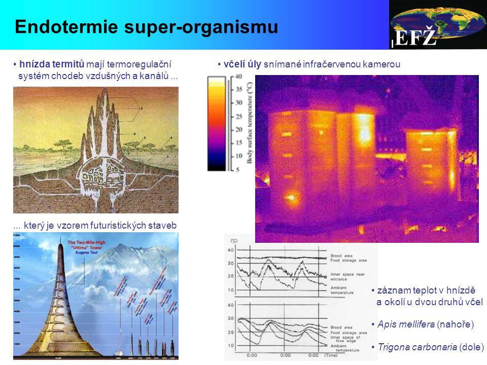 EFŽ Endotermie super-organismu hnízda termitů mají termoregulační