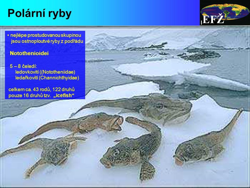 Polární ryby EFŽ nejlépe prostudovanou skupinou