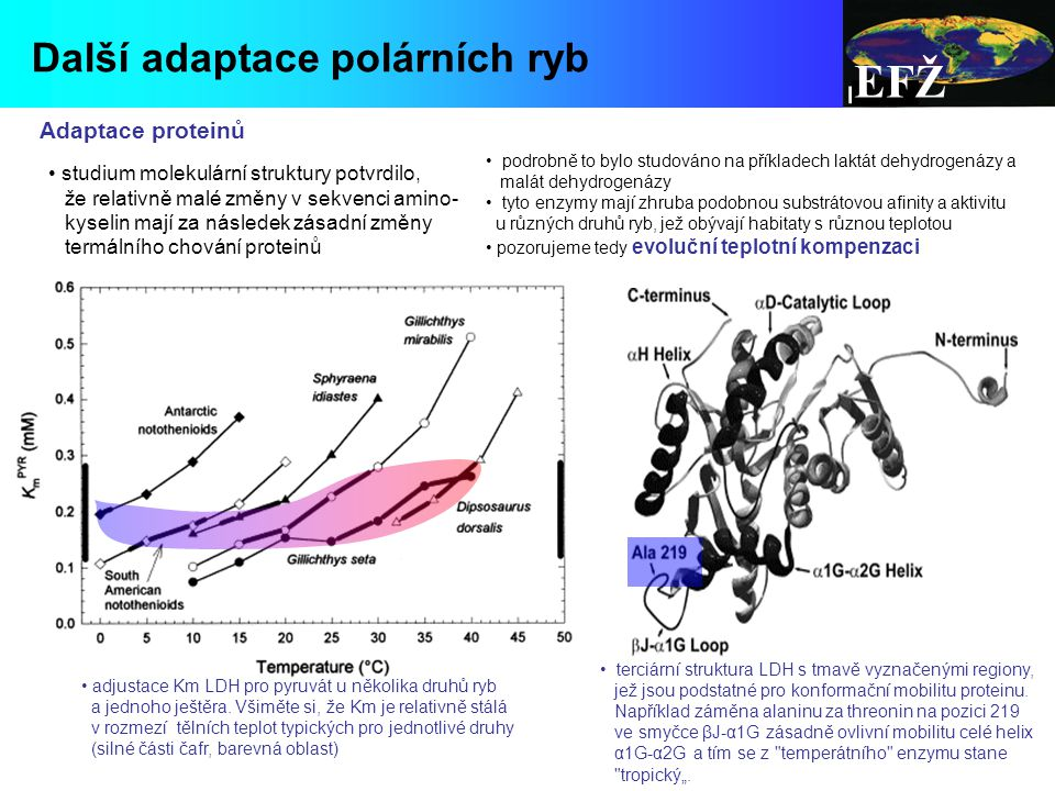 EFŽ Další adaptace polárních ryb Adaptace proteinů