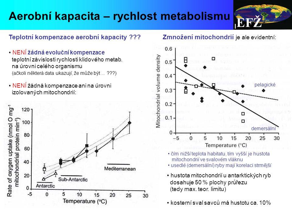 EFŽ Aerobní kapacita – rychlost metabolismu