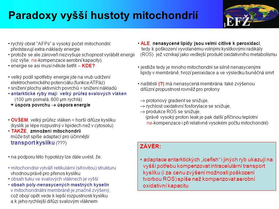 EFŽ Paradoxy vyšší hustoty mitochondrií ZÁVĚR: