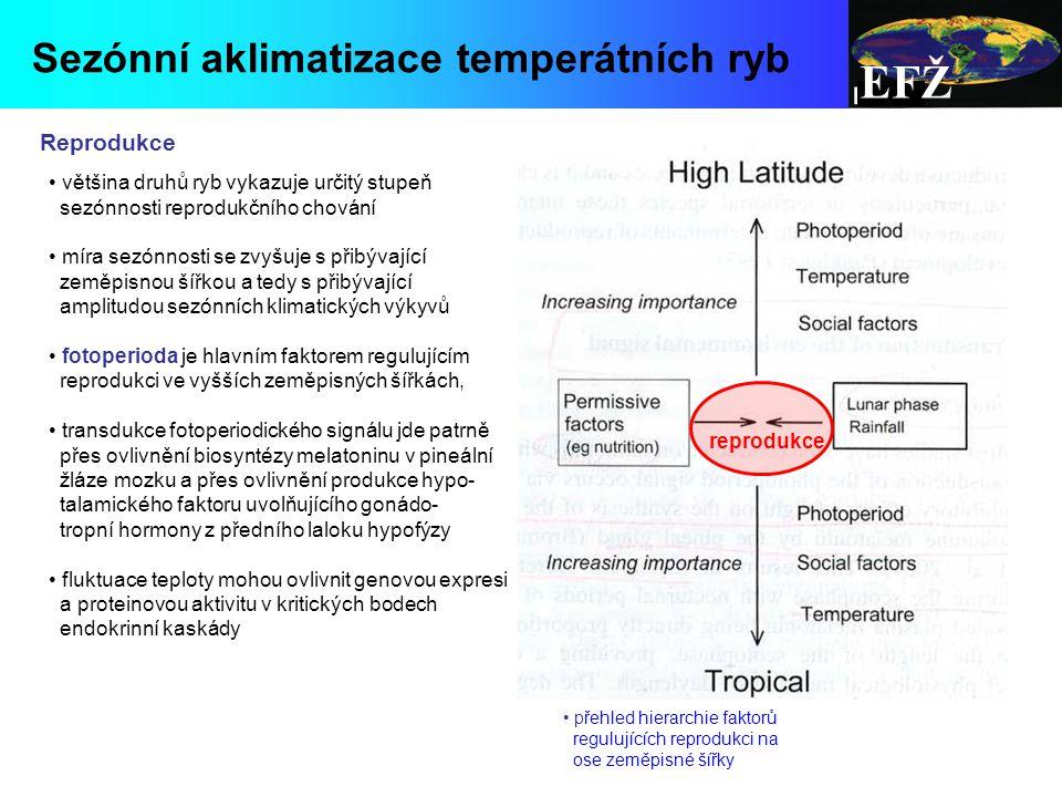 EFŽ Sezónní aklimatizace temperátních ryb Reprodukce