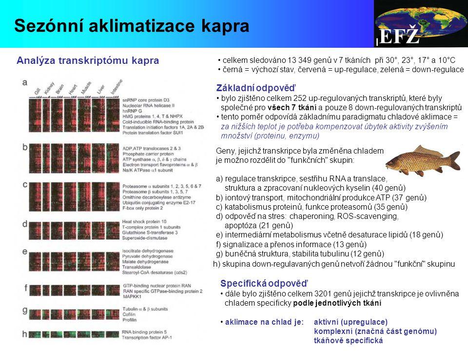 EFŽ Sezónní aklimatizace kapra Analýza transkriptómu kapra