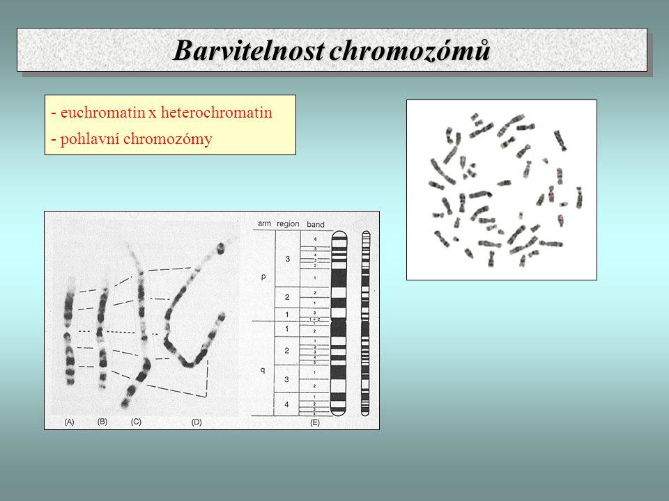 Barvitelnost chromozómů