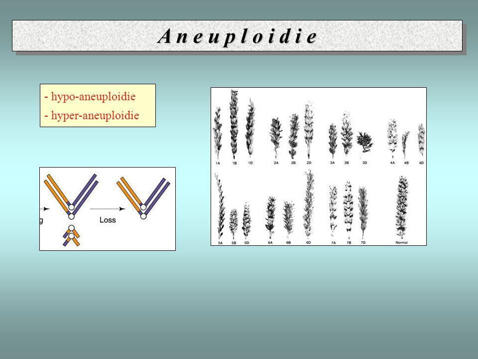 A n e u p l o i d i e - hypo-aneuploidie - hyper-aneuploidie