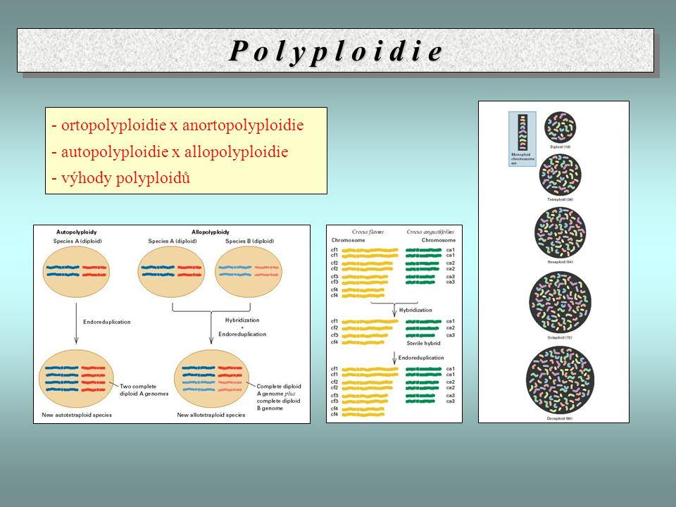 P o l y p l o i d i e - ortopolyploidie x anortopolyploidie