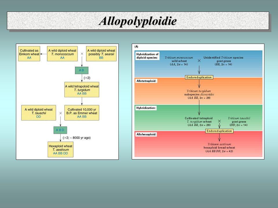 Allopolyploidie