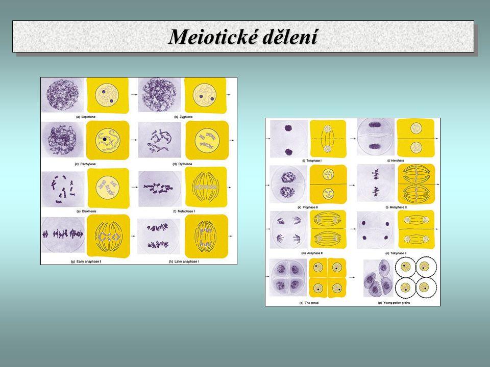 Meiotické dělení