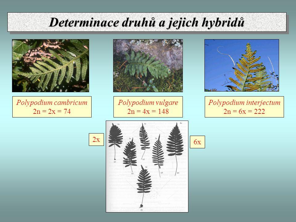 Determinace druhů a jejich hybridů