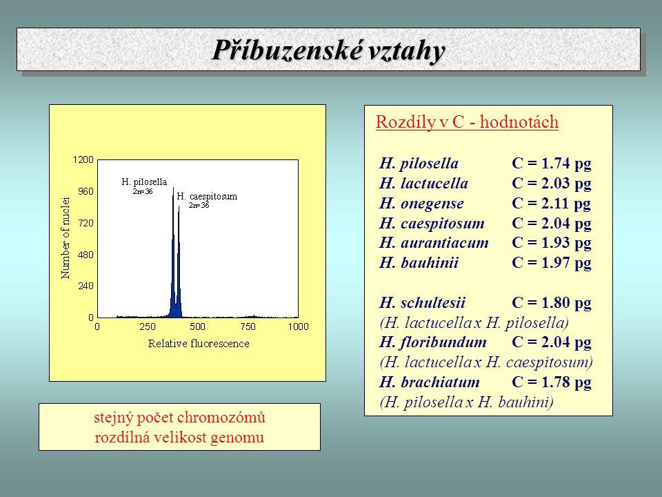 Příbuzenské vztahy Rozdíly v C - hodnotách H. pilosella C = 1.74 pg