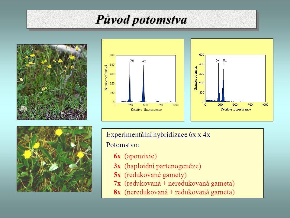 Původ potomstva Experimentální hybridizace 6x x 4x Potomstvo: