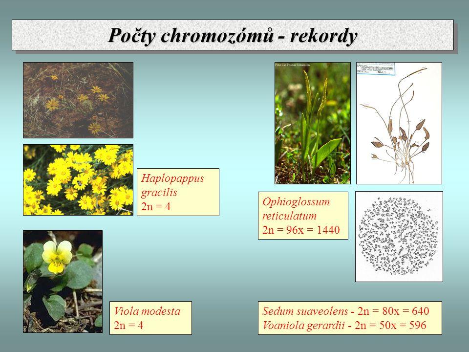 Počty chromozómů - rekordy