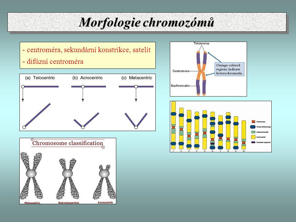 Morfologie chromozómů