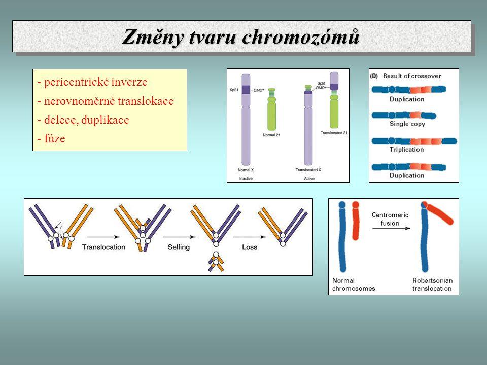 Změny tvaru chromozómů