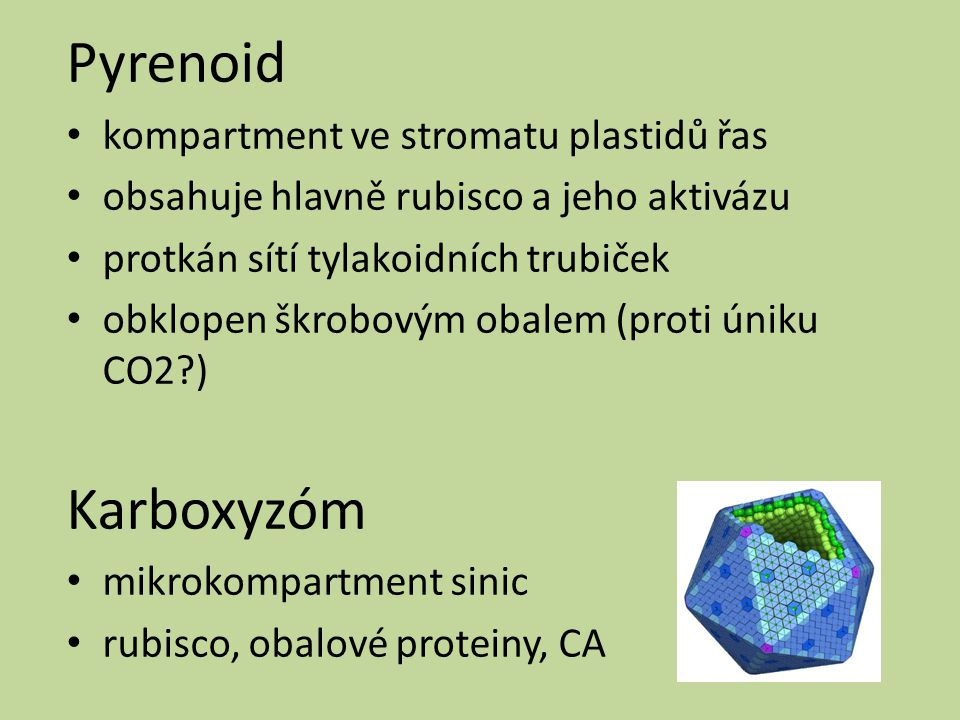 Pyrenoid Karboxyzóm kompartment ve stromatu plastidů řas