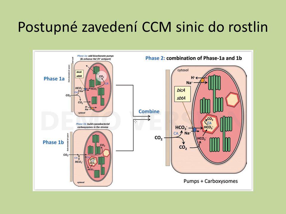 Postupné zavedení CCM sinic do rostlin