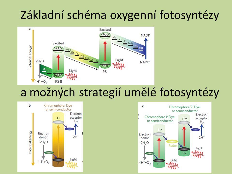 Základní schéma oxygenní fotosyntézy a možných strategií umělé fotosyntézy
