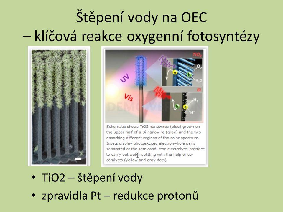 Štěpení vody na OEC – klíčová reakce oxygenní fotosyntézy