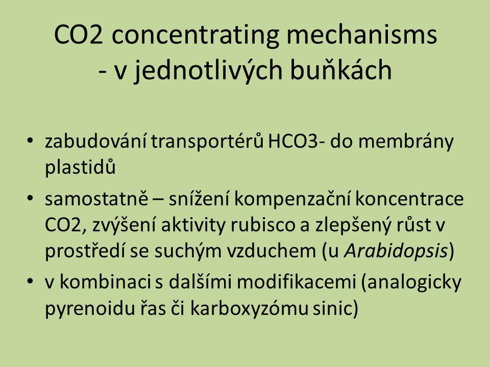 CO2 concentrating mechanisms - v jednotlivých buňkách