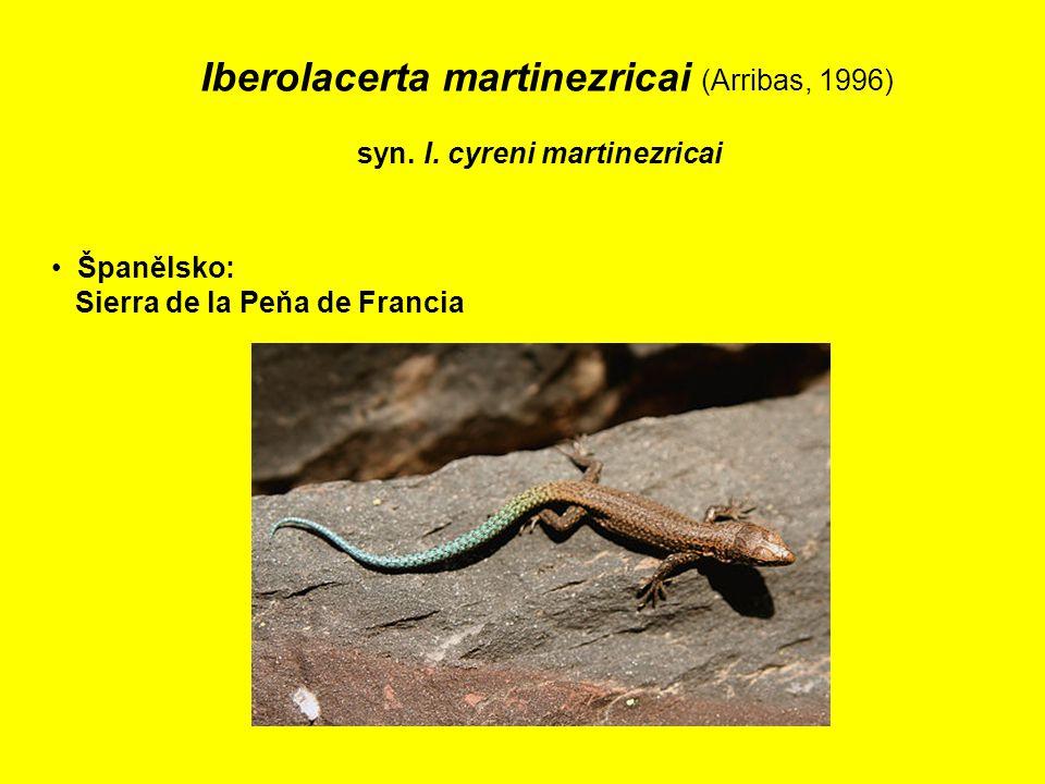 Iberolacerta martinezricai (Arribas, 1996)