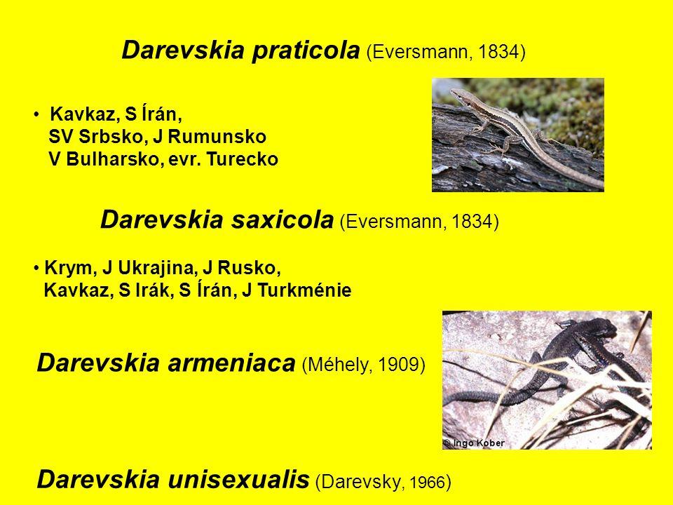 Darevskia praticola (Eversmann, 1834)