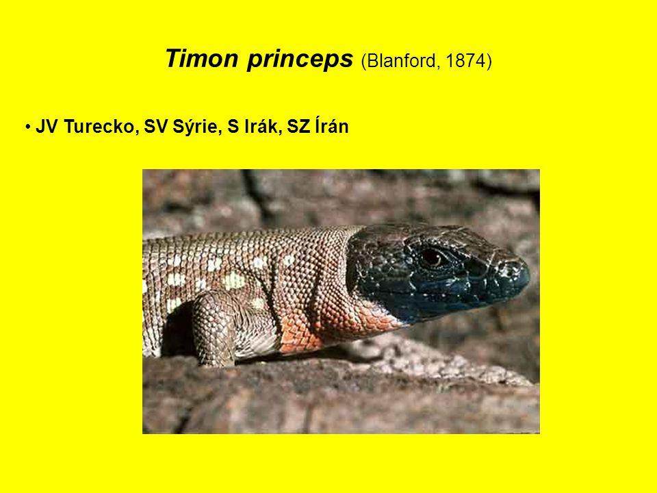 Timon princeps (Blanford, 1874)