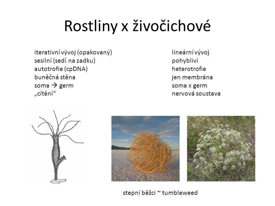 Rostliny x živočichové