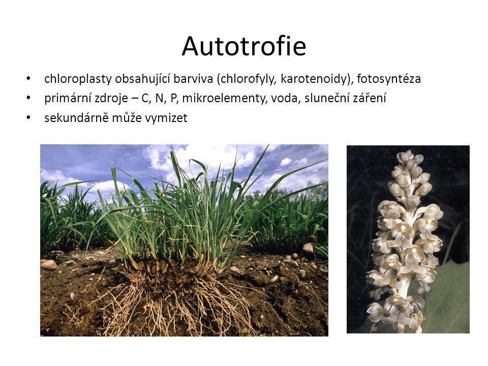 Autotrofie chloroplasty obsahující barviva (chlorofyly, karotenoidy), fotosyntéza. primární zdroje – C, N, P, mikroelementy, voda, sluneční záření.