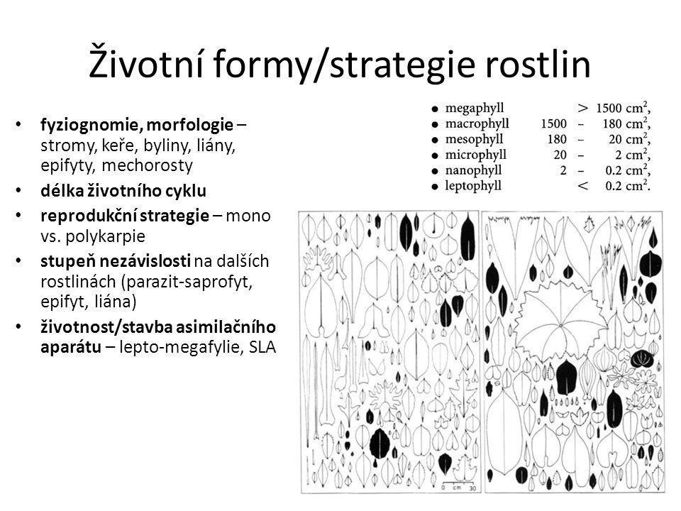 Životní formy/strategie rostlin