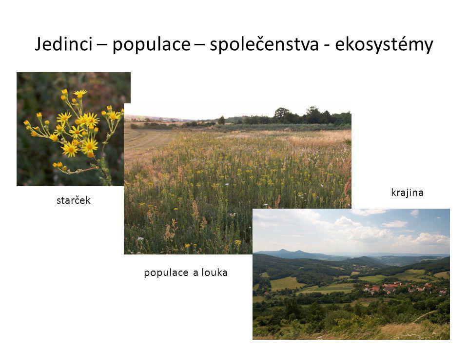 Jedinci – populace – společenstva - ekosystémy