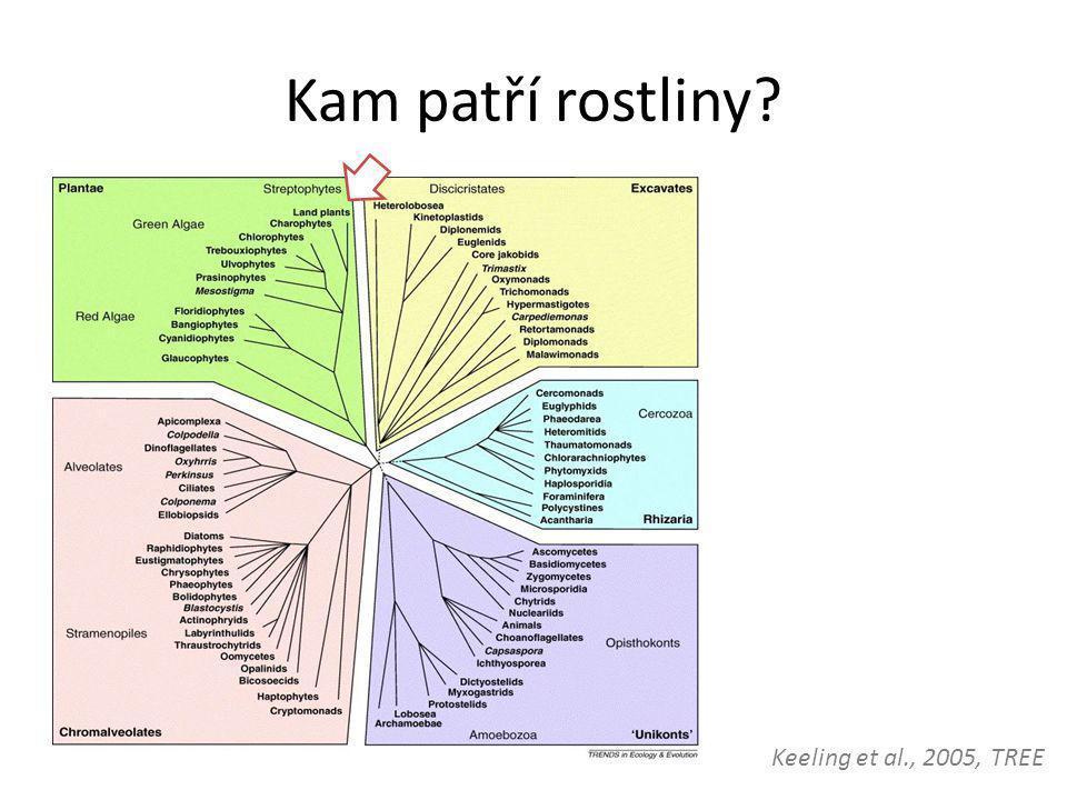 Kam patří rostliny Keeling et al., 2005, TREE