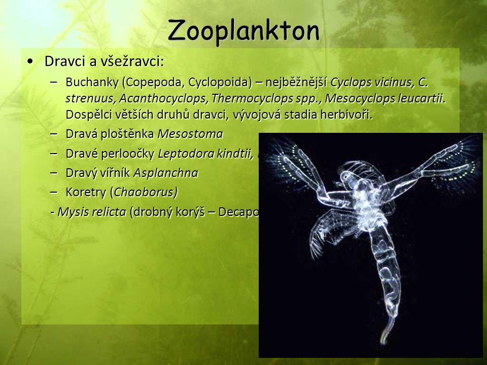 Zooplankton Dravci a všežravci: