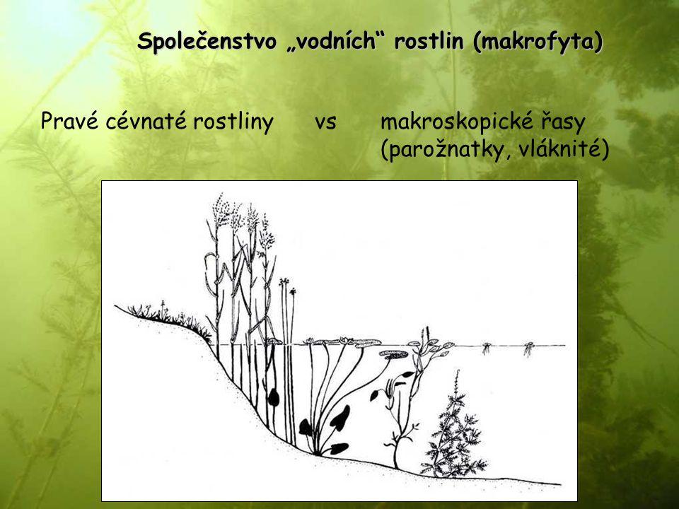 """Společenstvo """"vodních rostlin (makrofyta)"""