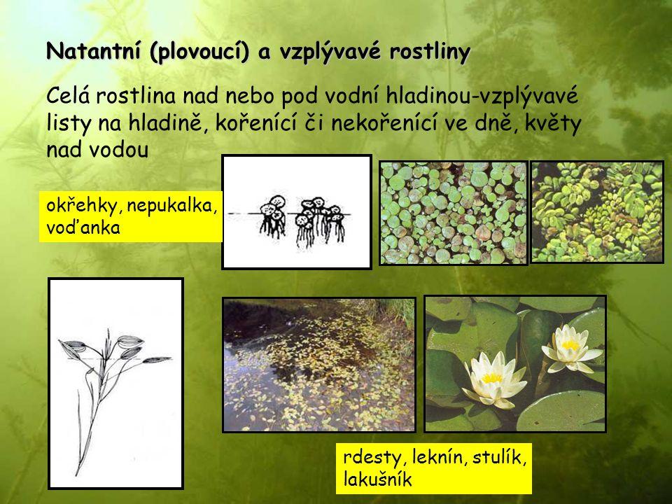 Natantní (plovoucí) a vzplývavé rostliny