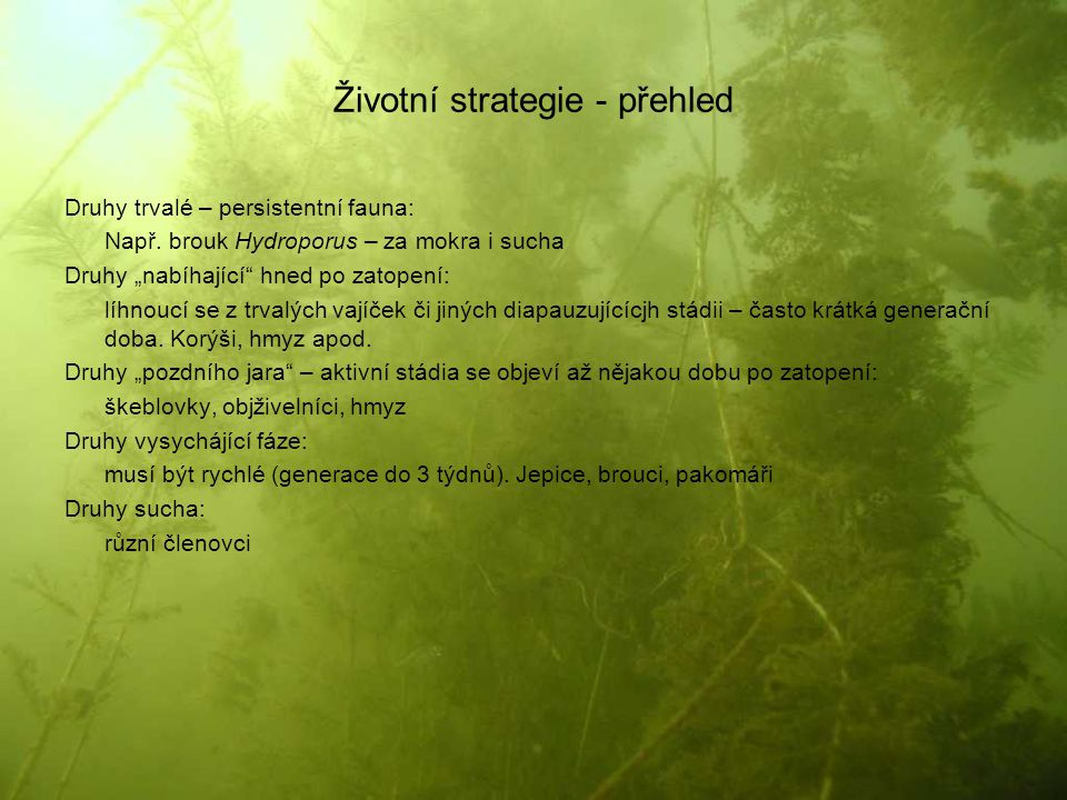 Životní strategie - přehled