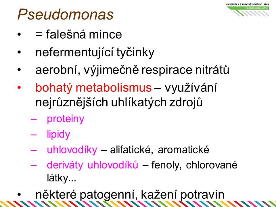 Pseudomonas = falešná mince nefermentující tyčinky