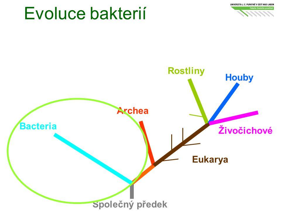 Evoluce bakterií Rostliny Houby Archea Bacteria Živočichové Eukarya