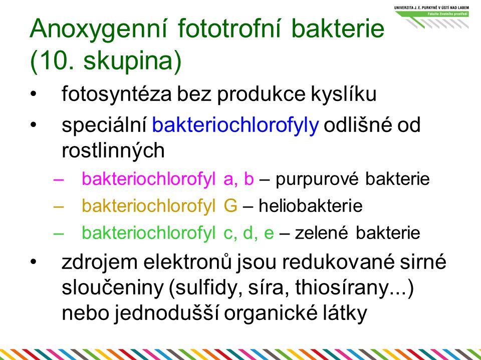 Anoxygenní fototrofní bakterie (10. skupina)