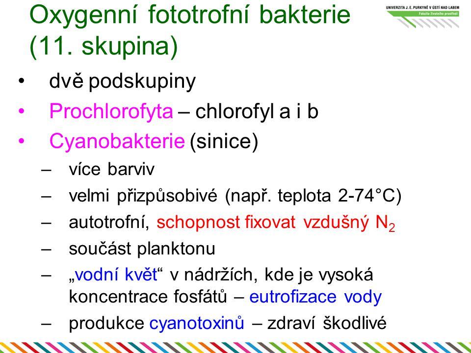 Oxygenní fototrofní bakterie (11. skupina)