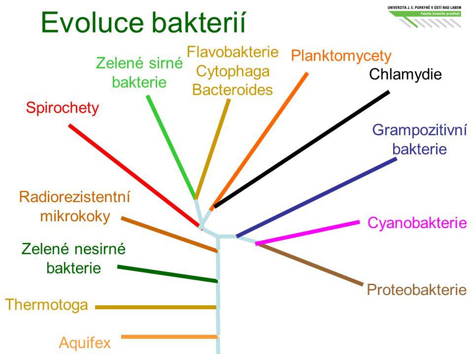 Evoluce bakterií Flavobakterie Planktomycety Cytophaga Zelené sirné