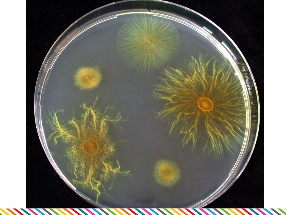 Myxobakterie (16. skupina)