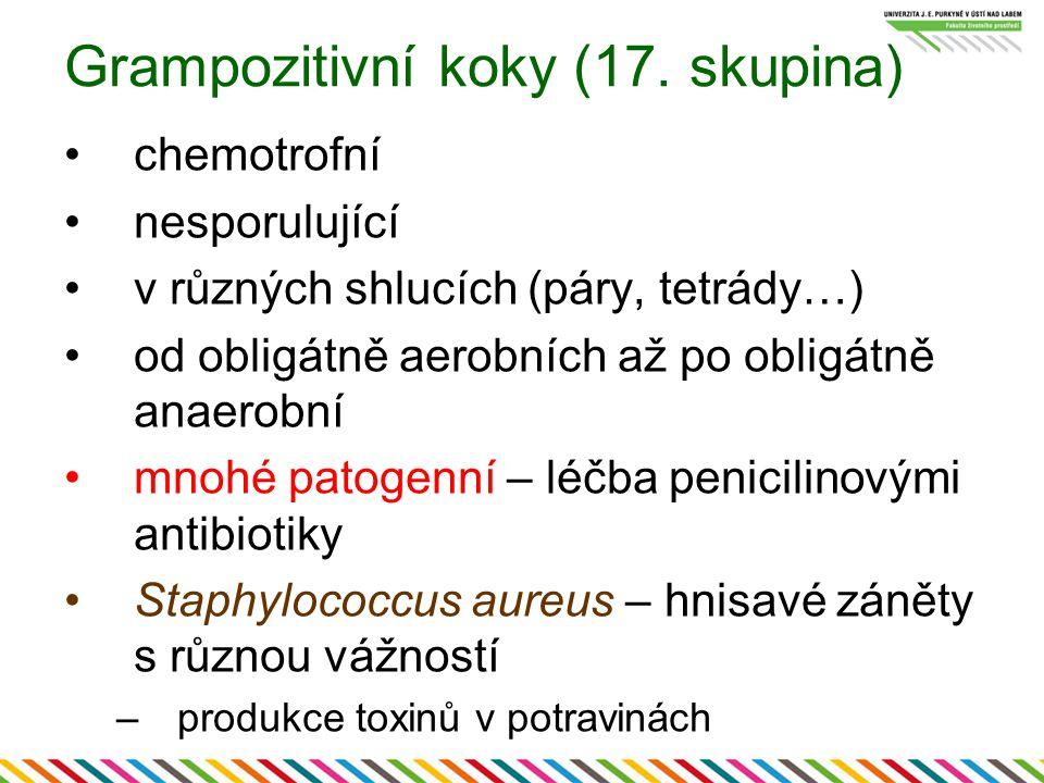 Grampozitivní koky (17. skupina)