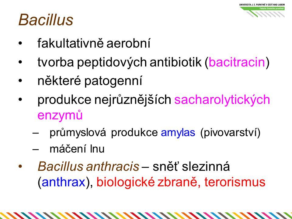 Bacillus fakultativně aerobní