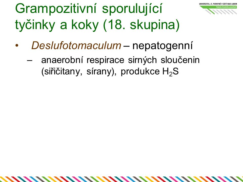 Grampozitivní sporulující tyčinky a koky (18. skupina)