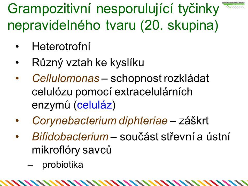 Grampozitivní nesporulující tyčinky nepravidelného tvaru (20. skupina)