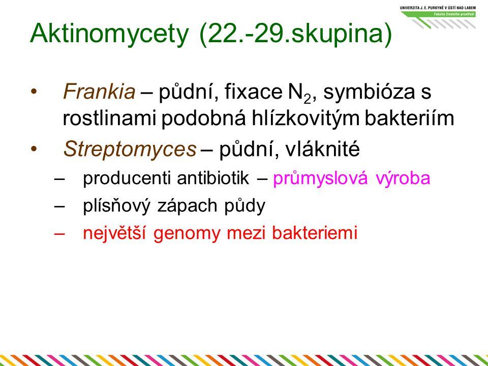 Aktinomycety (22.-29.skupina)